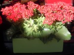 Red Kalanchoe, green container, ivy