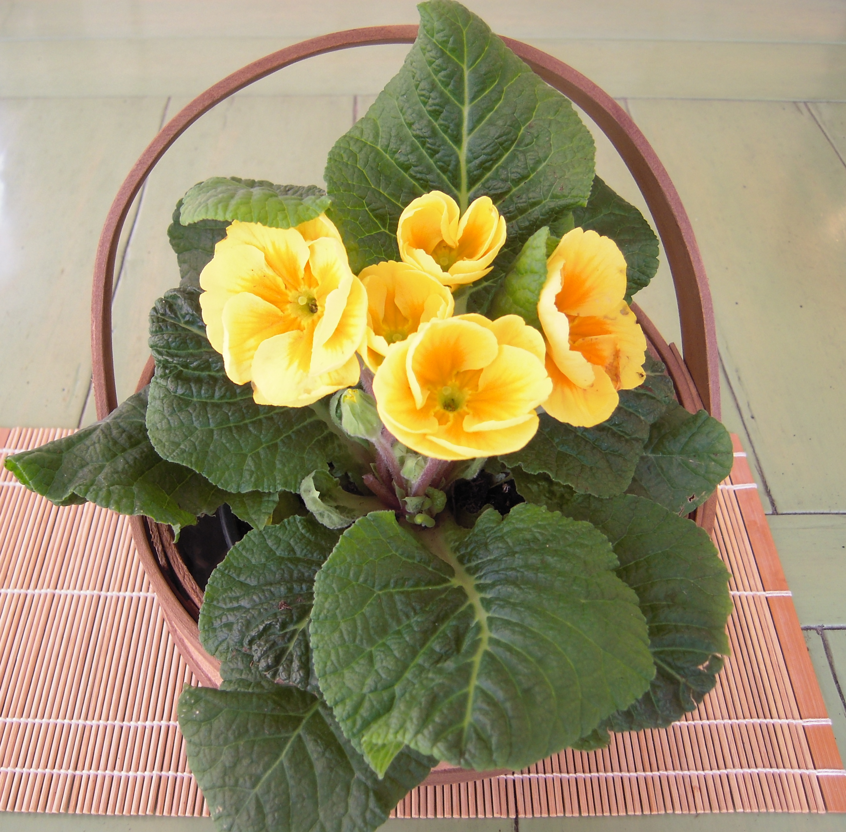 Gifts for seniors in care facilities help aging parents for Small indoor flowering plants