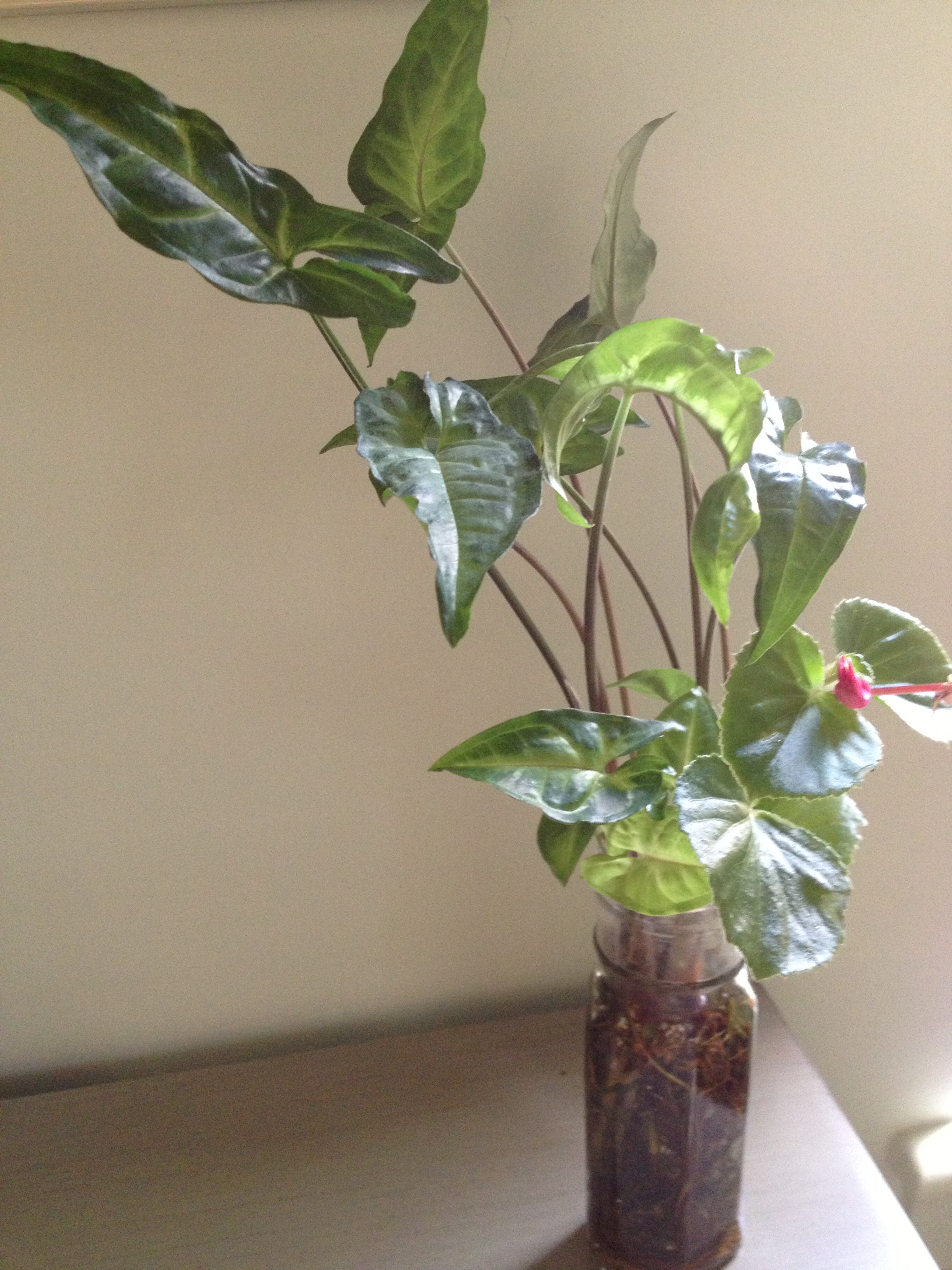 Help aging parents leafy easy care houseplants alive for Easy care indoor plants