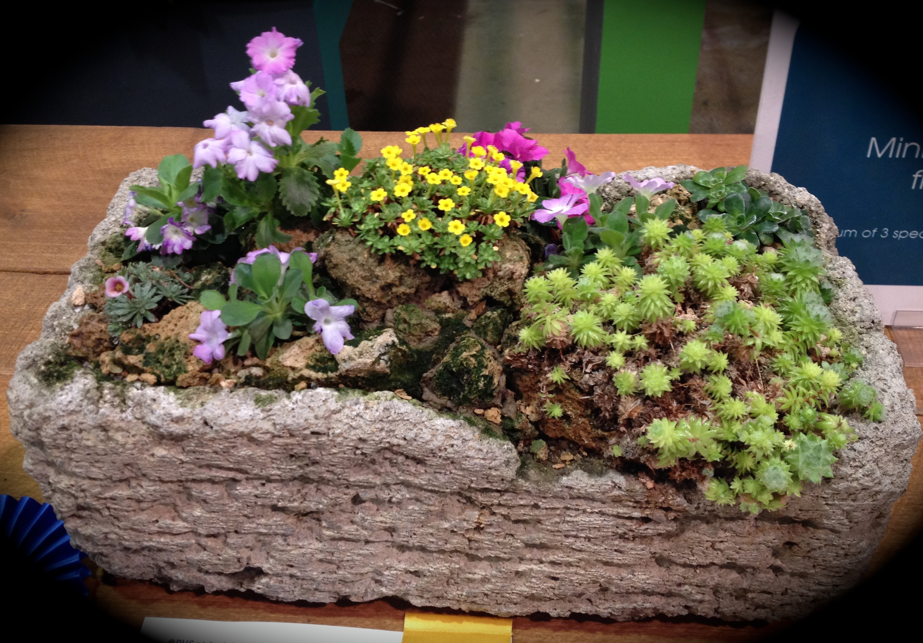 easy care dish gardens Help Aging Parents
