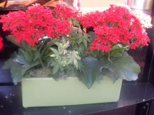 Red Kalanchoe-Green container